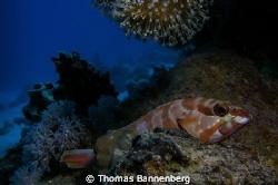 """Reef Scene NIKON D7000 in a Seacam """"Prelude"""" uw housing,... by Thomas Bannenberg"""