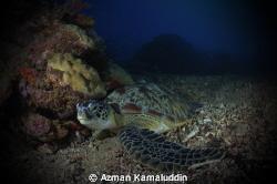 Lonely Turtle by Azman Kamaluddin