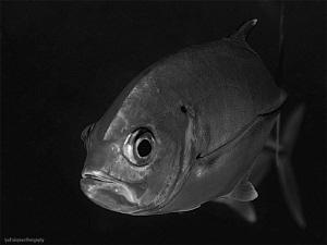 Jackfish by Iyad Suleyman