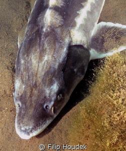 fish head by Filip Houdek