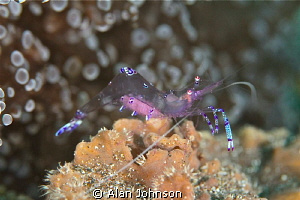 shrimp with eggs by Alan Johnson