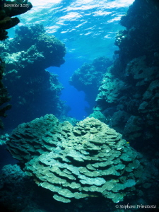 Hard coral garden in the Fury Shoal. by Stéphane Primatesta