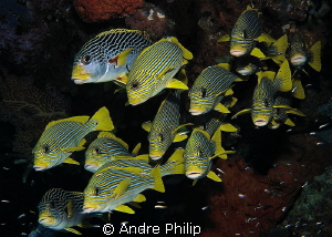 Sweetlips-Mix by Andre Philip