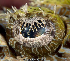 crocodile fish's eye,nikon D800 e,105 micro by Puddu Massimo