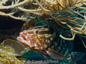 Ready for a 'Cleaning', Roatan , Honduras by David Gilchrist