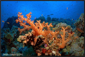 Beloved Red Sea. by Sergey Lisitsyn