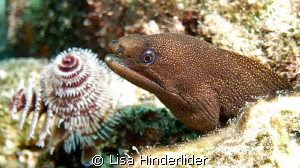 An Eel & a flower by Lisa Hinderlider