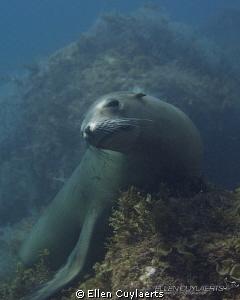 Ain't I pretty?  Sea lion posing by Ellen Cuylaerts