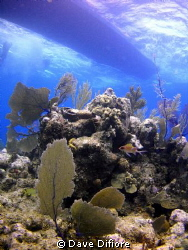 Squirrelfish on reef with dive boat waiting by Dave Difiore