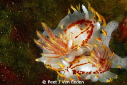 A fiery love affair by Peet J Van Eeden
