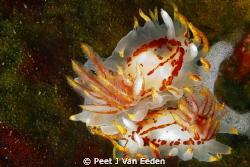 A fiery love affair by Peet J Van Eeden