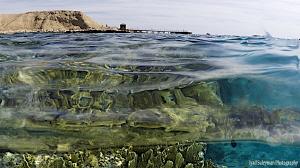 Reef of Red Sea by Iyad Suleyman