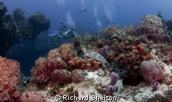 Hidden Treasure.  While on a drift dive off of Cozumel, M... by Richard Shelton