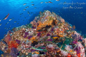 Just Reef in Morro, Puerto Vallarta Mexico by Alejandro Topete