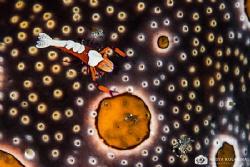Universe by Nadya Kulagina