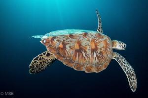 Young turtle colors. by Mehmet Salih Bilal