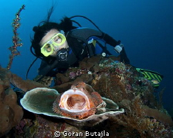 this scorpionfish from tulamben doesnt mind posing for ph... by Goran Butajla