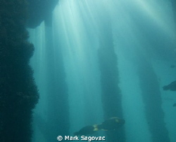 """Let the shine in- taken under one of the many boat piers... by Mark Sagovac"