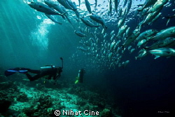 under jackfish shoal at Baracuda Point in Sipadan Island... by Nihat Cine