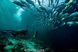 under jackfish shoal at Baracuda Point in Sipadan Island... by Nihat Cine