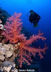 mighty elphinstone reef by Goran Butajla