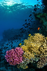 Red Sea reef at dusk. by Paul Colley