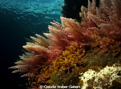 reef life...