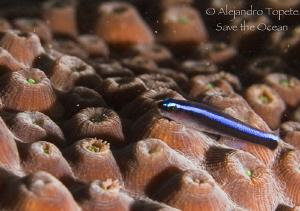 Litle fish in Coral, Veracruz Mexico by Alejandro Topete