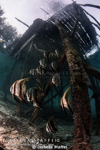 """THE JETTY""
