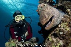 big moray eels are common around hurghada by Goran Butajla