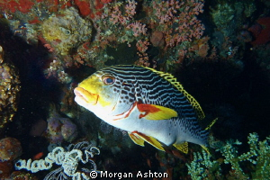 Sweetlips portrait in Komodo. Sony RX-100. by Morgan Ashton