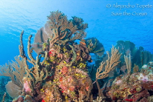 Amazing Reef, Gardens of the queen Cuba by Alejandro Topete