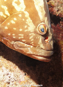 Magic eye on this grouper who was begging for attention. ... by William Goodwin
