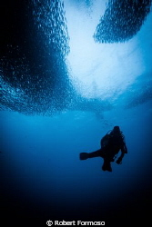 shot in Moal Boal sardine shoal by Robert Formoso