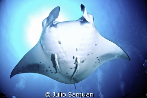 Manta above the bubles of divers, Nikon D70, 10mm, 2 Inon... by Julio Sanjuan