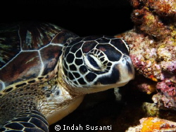 Hey you.. by Indah Susanti