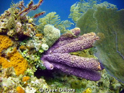 Very Large tube sponges by Dave Difiore