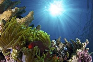 Clownfishes in sun rays  Bunaken, Indonesia by Iyad Suleyman