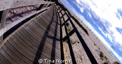 Fire Island by Tina Norris