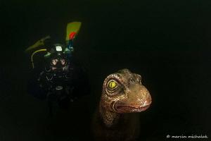 My new dive buddy by Marcin Michalak