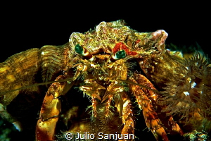 Hermit crab during night dive in Ibiza. F90 in Aquatica H... by Julio Sanjuan