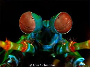 evil eyes by Uwe Schmolke