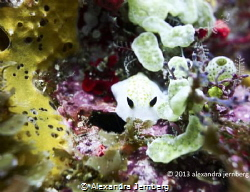 Nudibranch. Sony Rx-100. by Alexandra Jernberg