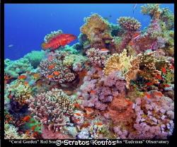 This photo taken in Abu Nuhas Reef. by Stratos Koufos