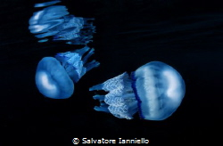 Theer jellyfish by Salvatore Ianniello