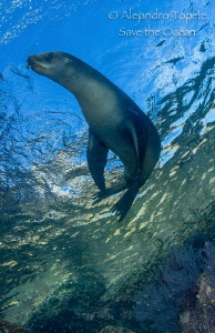 Sea Lion in the Sky, La Paz Mexico by Alejandro Topete