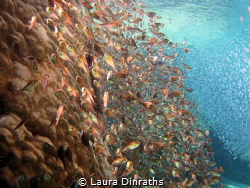 Two schools of fish in a channel by Laura Dinraths