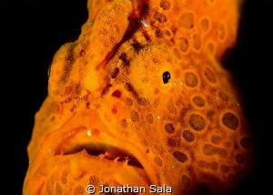 Froggy portait by Jonathan Sala