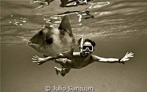 Meeting with triggerfish by Julio Sanjuan