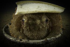 Coconutoctopus by Doris Vierkötter